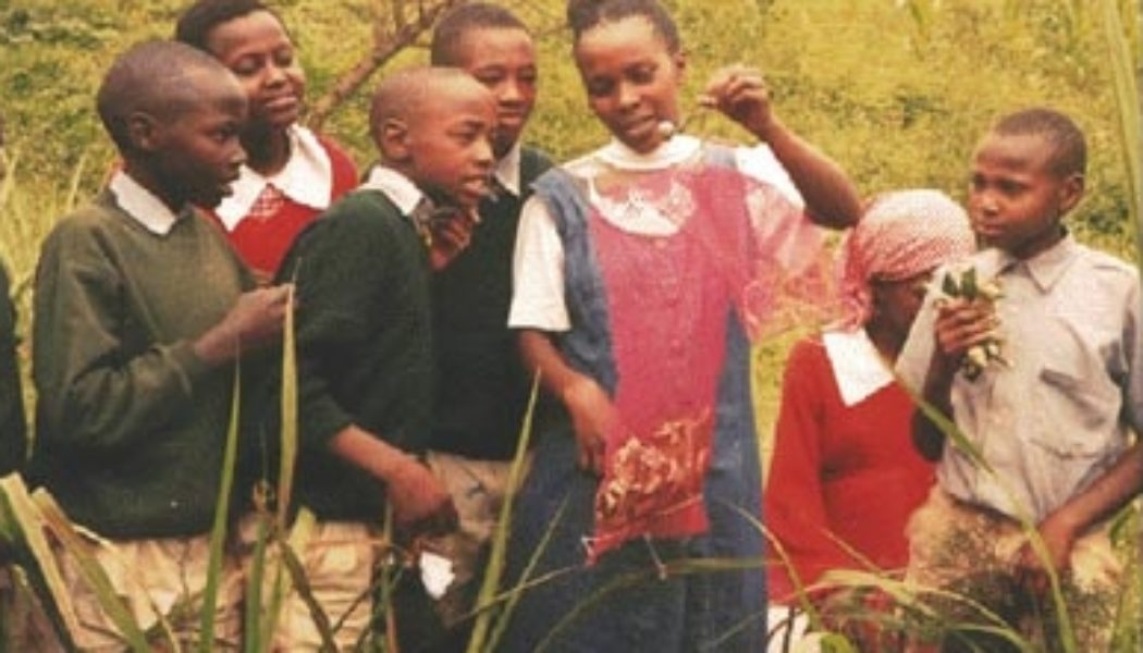 Students in Kenya Do the Leaf Pack Experiment